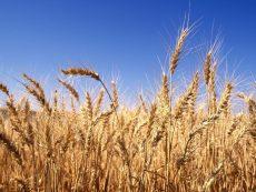 September 2017 | A Harvest Meditation